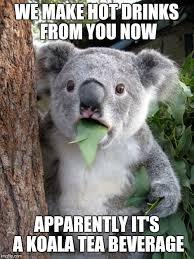 Tea Meme - koala tea meme imgflip