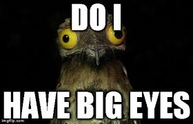 Lazer Meme - potoo meme big eye bird lazer horse