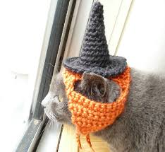 small dog witch costume dog hat crochet pattern witch hat pampered pooch instant download