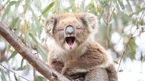 native plants adelaide australia u0027s animals tourism australia