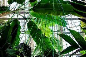 atlanta u0027s botanical garden will brighten up with rainbow trees