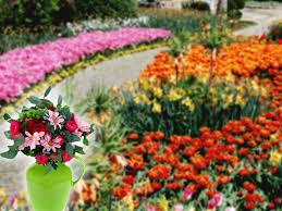 flower garden backgrounds group 48