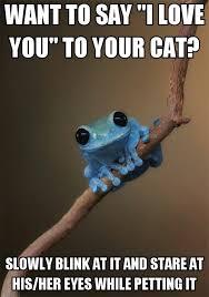Cat Facts Meme - cat facts meme by deltaderps memedroid