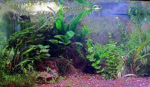 wp u0027s 10 gal seasons of a planted tank 256k the planted