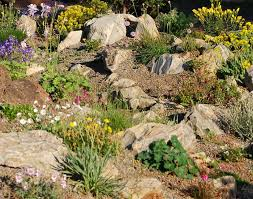 rock garden ideas care calendar for alpine garden plants