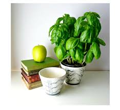 modern herb pots envirogreenery interior plants office plants for
