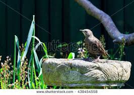ornamental bird bath stock images royalty free images vectors