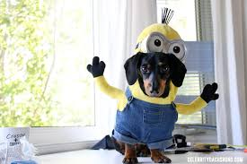 minion costume how to make a minions costume for small dogs crusoe the