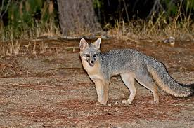 West Virginia wild animals images 10 photos of dangerous animals in west virginia jpg