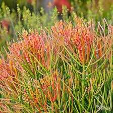 Images Of Rock Gardens Best Plants For Rock Gardens