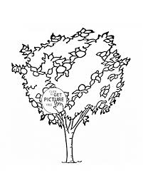 orange tree fruit coloring page for kids fruits coloring pages