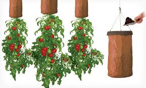 topsy turvy tomato vertical vegetable garden
