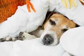 queen s dogs dog daycare u0026 boarding astoria u0026 sunnyside ny u2014 treats u0026 tips