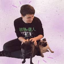 affenpinscher youtube dan and phil gifs gifs create discover and share awesome gifs