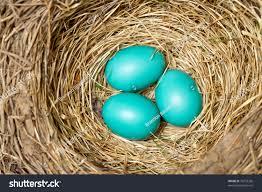 blue bird eggs new nest stock photo 76733236 shutterstock