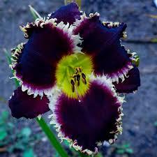 heavenly gardens home facebook