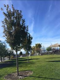 henderson program honors loved ones with commemorative trees park