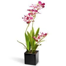 orchid flowers national tree co orchid flowers in pot reviews wayfair ca