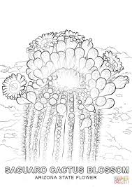 coloring pages arizona coloring page flower pages arizona