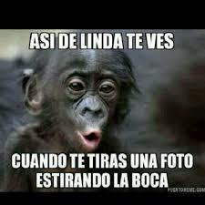 Omaiga Meme - omaiga meme monkey meme best of the funny meme