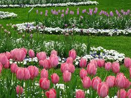 Blumen Baden Baden Blumen Baden Elizabeth Melton Parsons