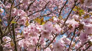 Beautiful Pictures Of Spring by Spring At Kew See The Gardens Come Alive Youtube