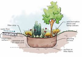 california native plant garden design mother nature u0027s backyard a water wise garden harvesting rain