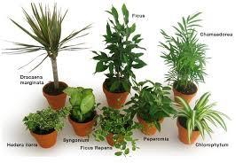 plante verte dans une chambre maison les plantes dépolluantes vous connaissez