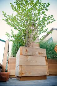 roof deck planters outdoor furniture birch trees urban