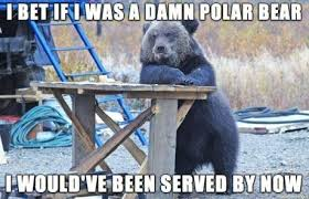 Polar Bear Meme - if i was a polar bear thats racist funny bear meme kill the hydra