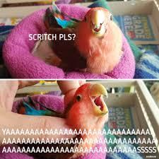 Parrot Meme - parrot memes tumblr