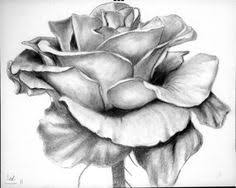 gallery rose pencil drawing easy drawing art gallery