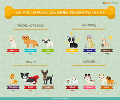 the ultimate list of popular dog names u0026 breeds infographic by