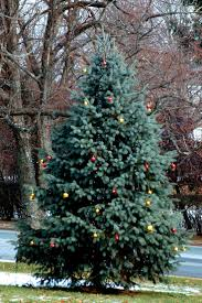 Outdoor Christmas Trees by 402 Best Christmas Trees Images On Pinterest Xmas Trees