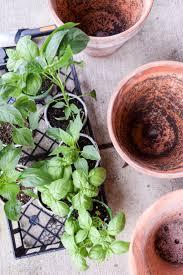 Vegetable Garden Blogs by 201 Best Patio Gardening Images On Pinterest Patio Ideas Garden