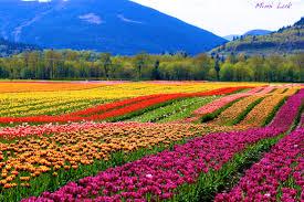 flowers canada flowers to inspire by mimi luk mimi luk