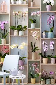 phalaenopsis orchidee interieur blog pinterest display