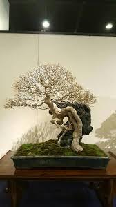 pot bonsai design 254 best deciduous bonsai images on pinterest bonsai trees