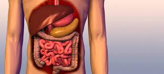 bauchspeicheldrüsenschwäche symptome bauchspeicheldrüse wofür brauchen wir das organ