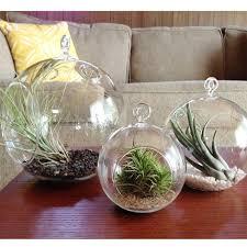 best 25 hanging terrarium ideas on pinterest hanging plants