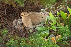 Nc Backyard Birds Bird Nesting Late Nesters Attracting Birds Birds U0026 Blooms