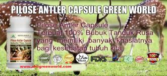 admin author at ahli green world