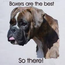 boxer dog sayings 819 best dog quotes u0026 meme images on pinterest dog quotes