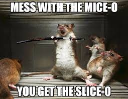 Rodent Meme - mess with these scrappy animals and you re gonna get a brand new