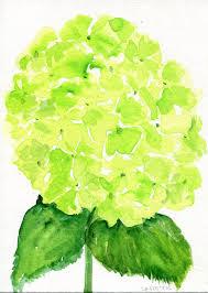 Lime Green Flowers - hydrangeas watercolors paintings original 5 x 7 by sharonfosterart