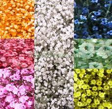 wedding flowers bulk wholesale flowers wedding flowers bulk flowers buy fresh cut