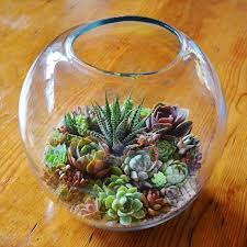 succulent design u0026 gifts