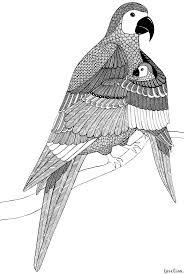 127 best vogels kleurplaten images on pinterest coloring books