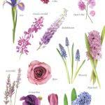 wedding flowers list purple flowers list with names 25 best flower names ideas on