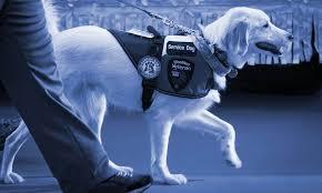 West Virginia How To Travel With A Dog images Service dog registration emotional support animal registration jpg
